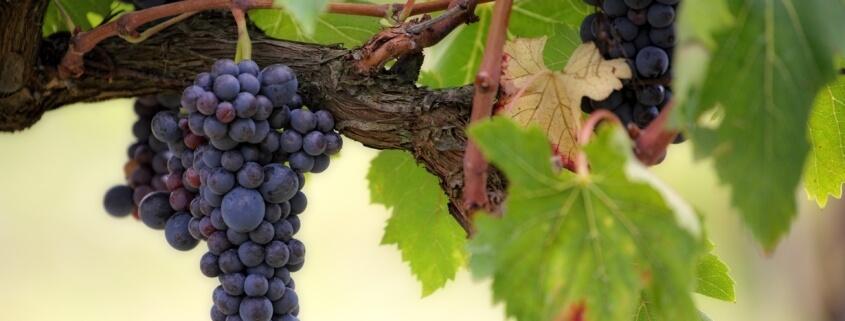 Winery Insurance Minnesota